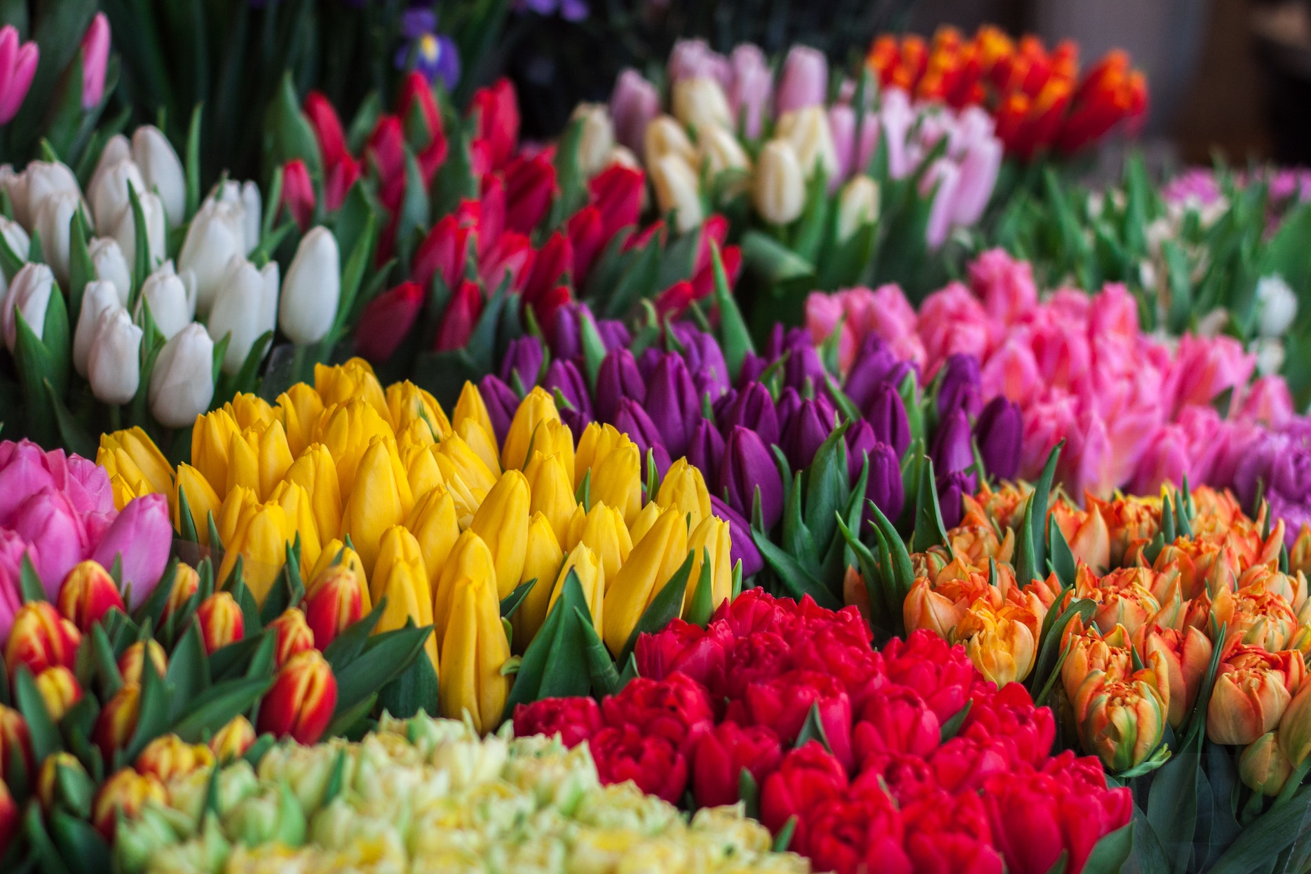 Toowoomba Carnival of Flowers?>