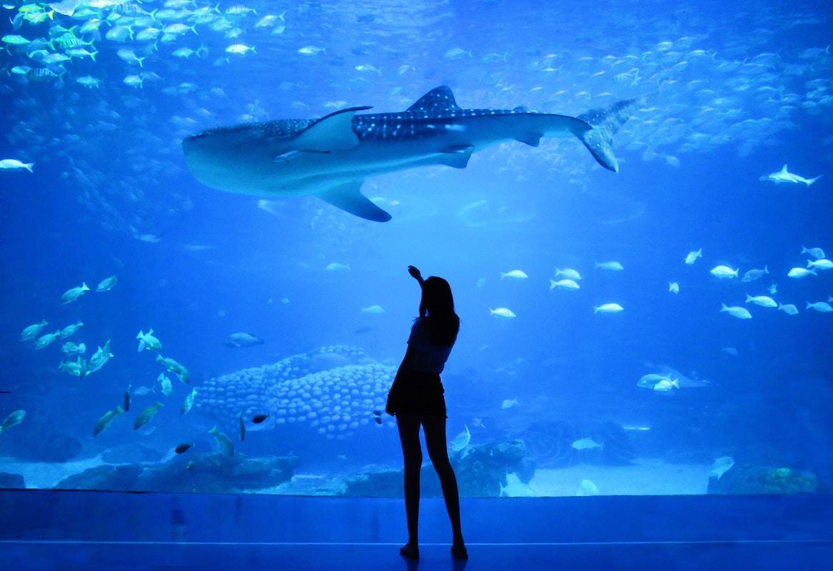 Aquarium of Western Australia (AQWA)?>